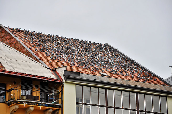 A2B Pest Control are able to install spikes to deter birds from roofs in Uxbridge.