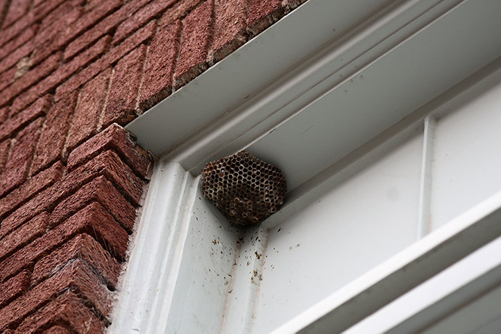 We provide a wasp nest removal service for domestic and commercial properties in Uxbridge.